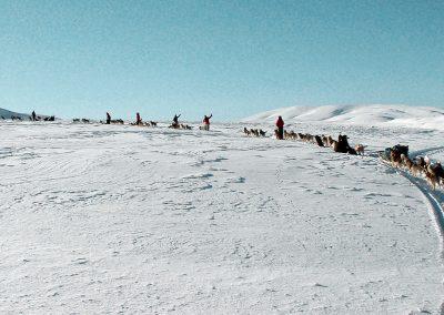Huskies d'élevage dans la neige en france